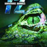 72 Tehlikeli Hayvan Avustralya İndir – Türkçe Dublaj 1080p