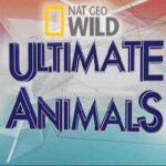 NAT GEO WILD – Muhteşem Canlılar İndir – Türkçe Dublaj 1080p