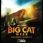 Büyük Kedilerin Haftası 720p İndir – TR-EN Dual